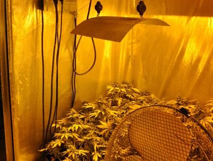 Torrent.marihuana