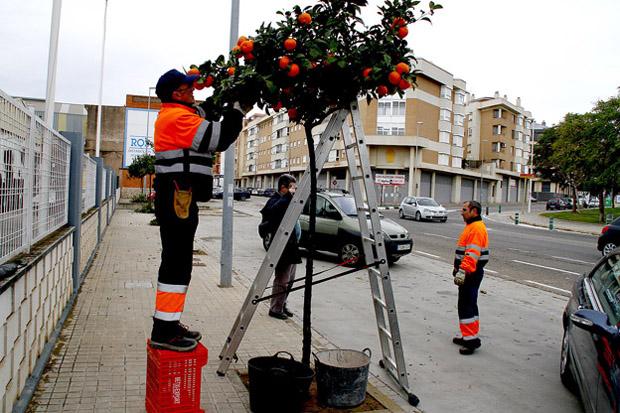 01.puzol.naranjas2