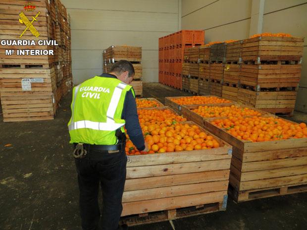 Guardia Civil. robos. Naranjas. Silla. Picassent