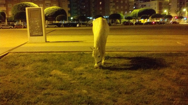 Mislata. caballo abandonado. centro ciudad.