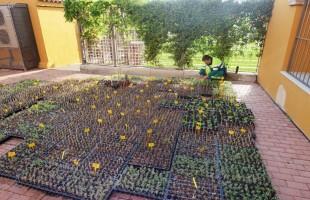 Todas las localidades de l'Horta Sud menos Torrent tendrán dinero de Diputación para mejorar parques y jardines