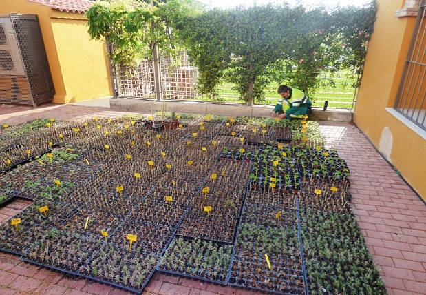 Torrent. arboles. Parques y jardines
