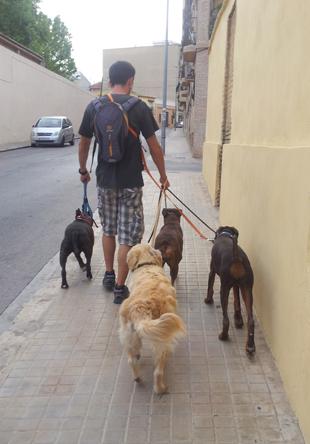 denuncias tenencia animales burjassot