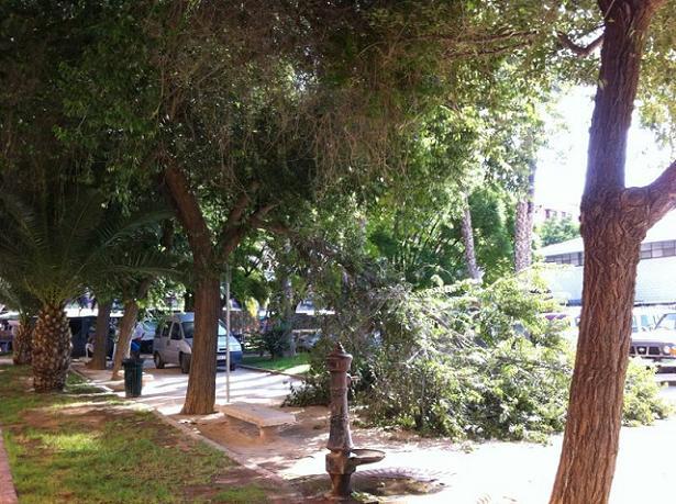 árbol caído alaquàs