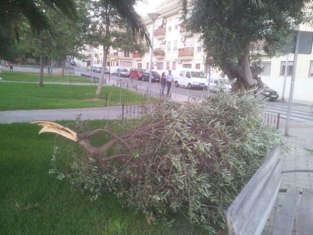 Rama caída en parque infantil de Santa Rita