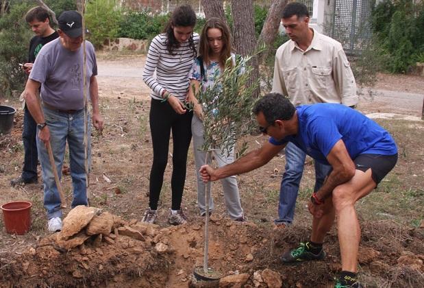 Torrent-reforestacion-Vedat-plaga-tomicus
