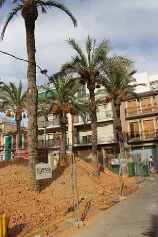 palmeras mercado de paiporta