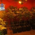 marihuana quart de poblet