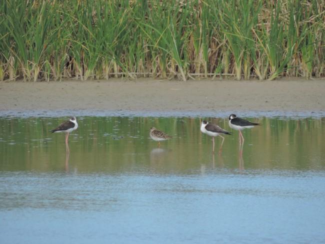 curso observación aves burjassot