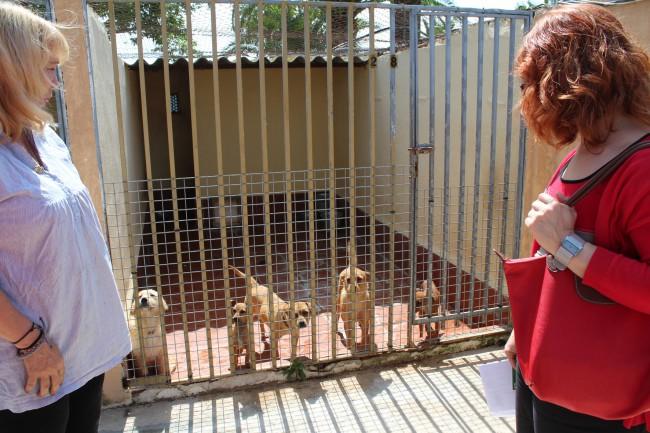 visita centro canino