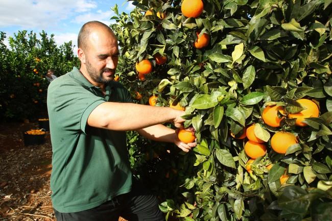 Naranjas-mercadona