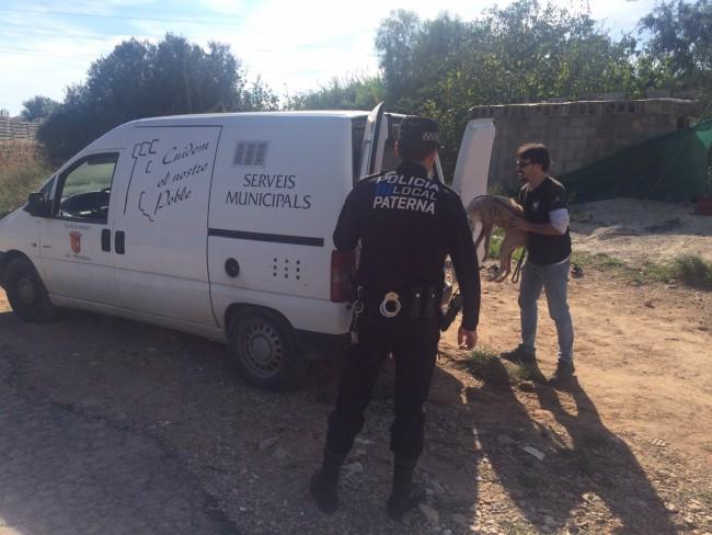 Paterna-Policia-local-Perros abandonados