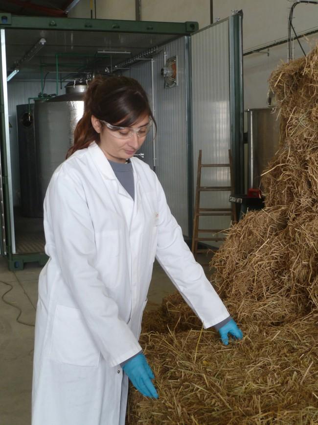 planta de tratamiento paja del arroz