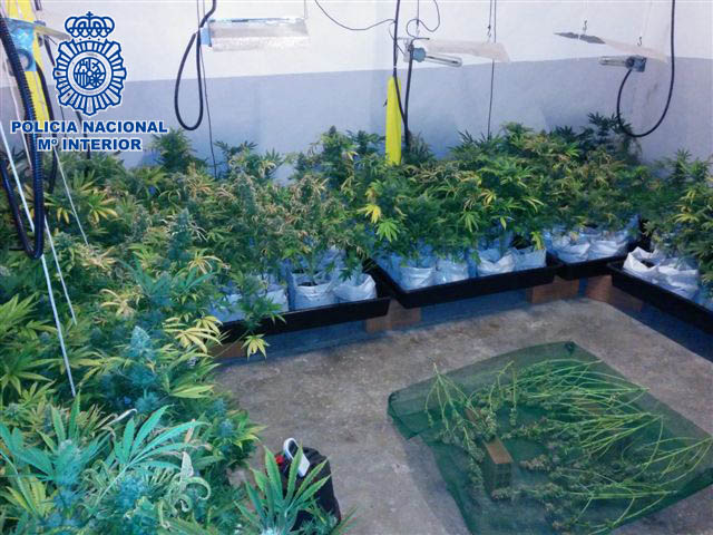 marihuana manises