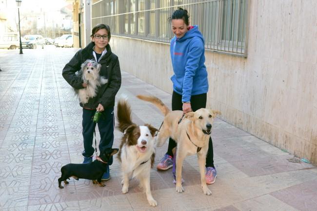 paiporta. casting perros