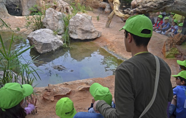Alimentación de los cocodrilos - Expedición África Pascua - Bioparc Valencia
