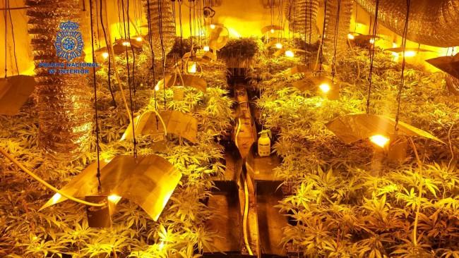 Guardia Civil. Plantación marihuana. Manises