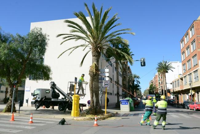 palmeras paiporta