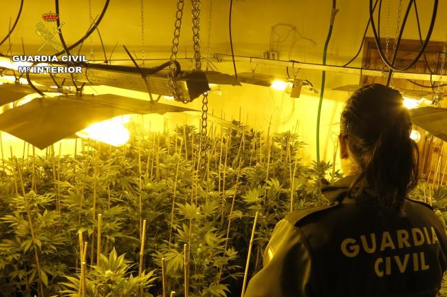 laboratorios de producción de marihuana Silla