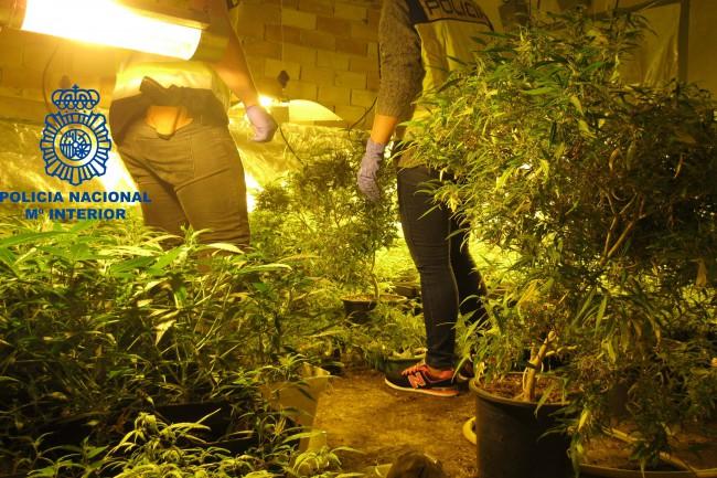 marihuana quart de poblet (1)