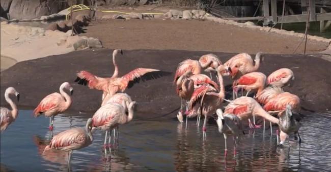 lago flamencos oceanogràfic