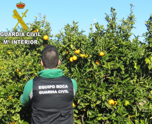 Guardia Civil. foto campo naranjas