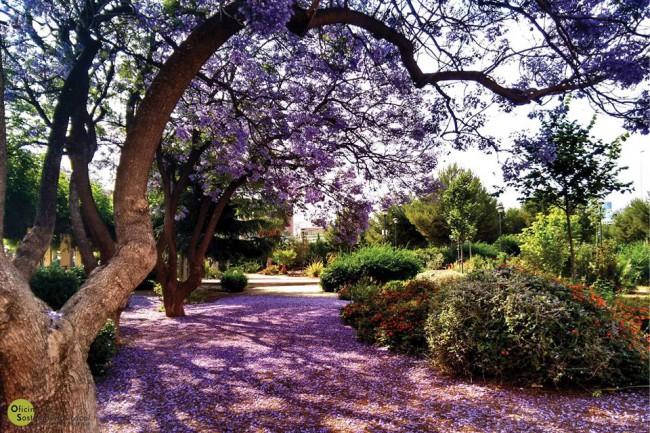 Parc Misionero de Burjassot,  junt al Castell