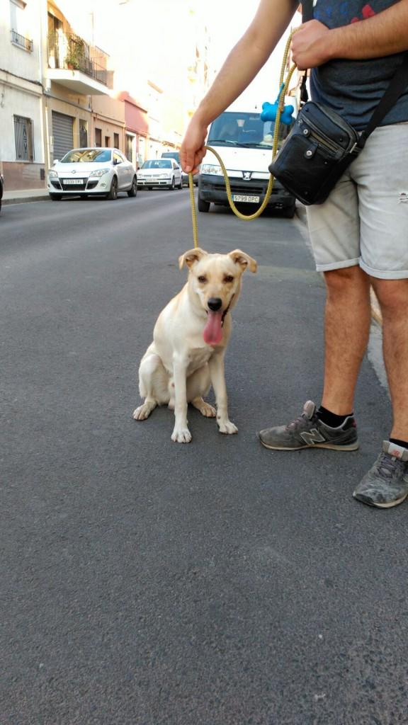 Burjassot. perro abandonado