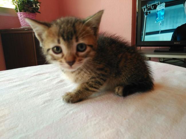 gatos abandonados spab burjassot (1)