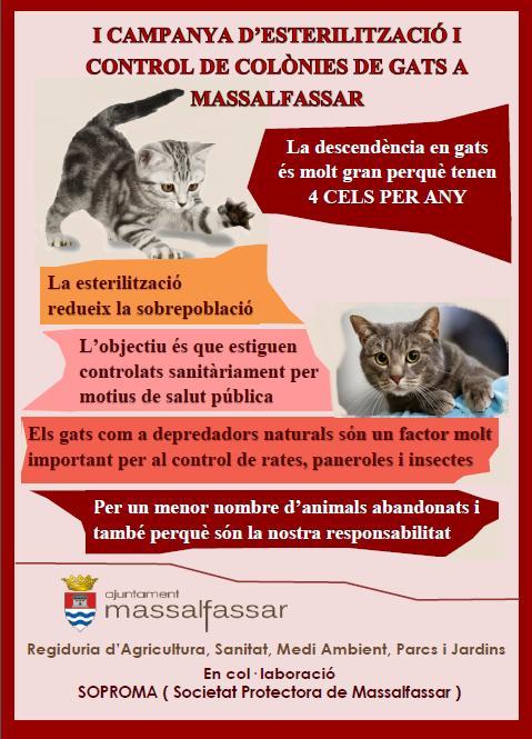 campana-esterilizacion-gatos-massalfassar