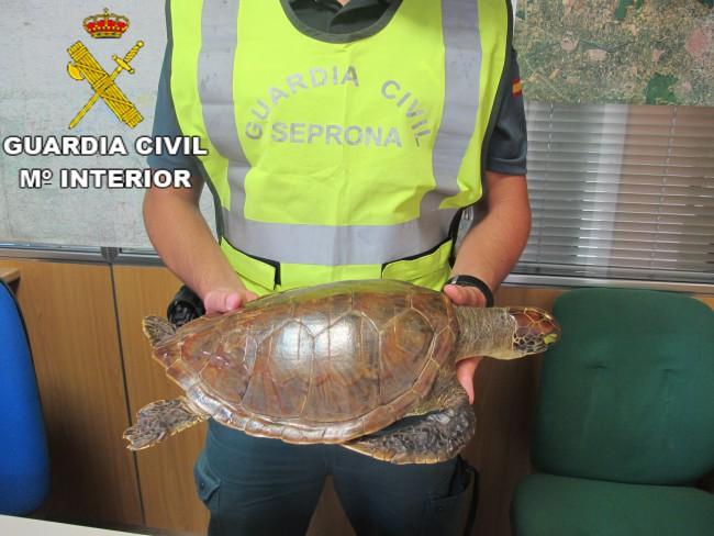tortuga Carey Guardia civil Burjassot