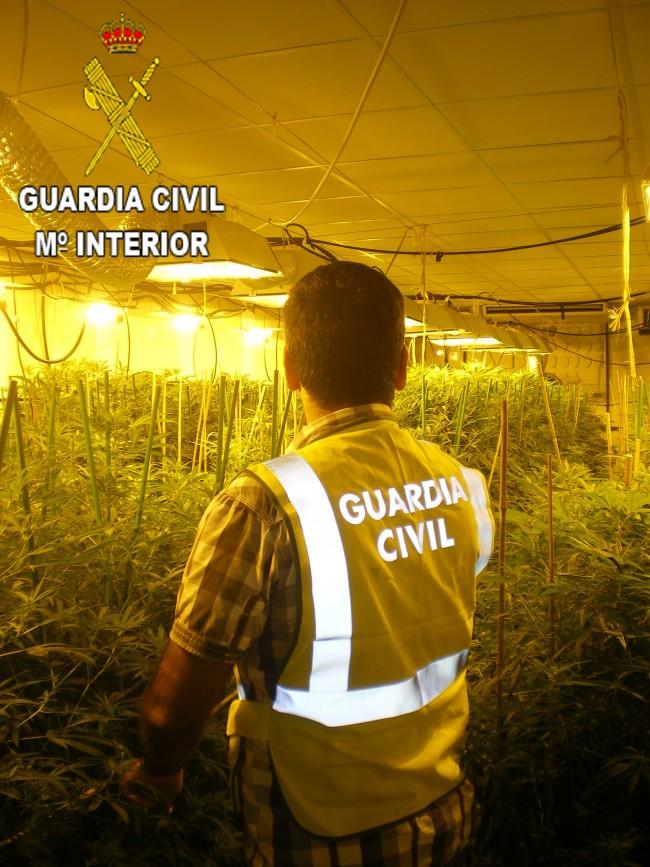 foto-marihuana1