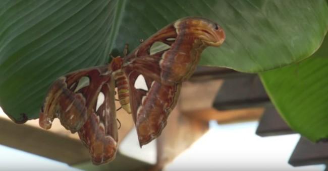 mariposas-gigantes-oceanografic