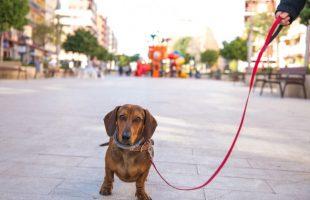 Mislata censa a 2.316 perros durante la campaña de extracciones gratuitas de ADN