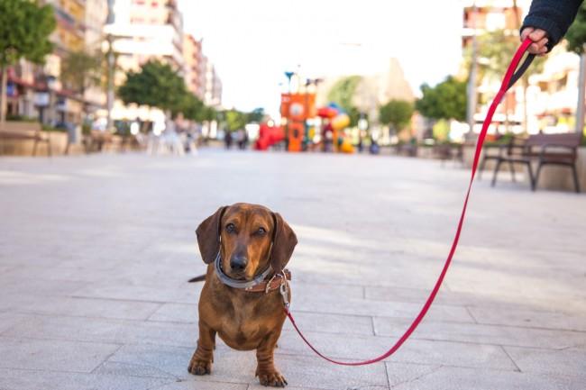 ADN canino Mislata