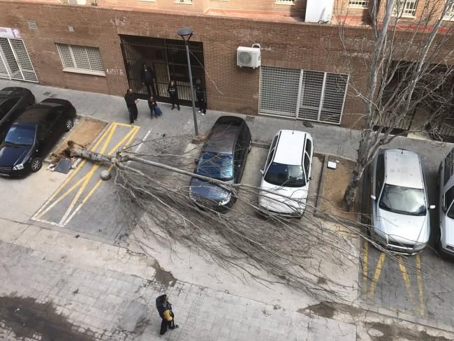 Arbol caido en Paterna. foto 0rtherion80