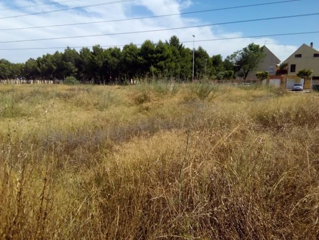 Parcelas abandonadas Paiporta