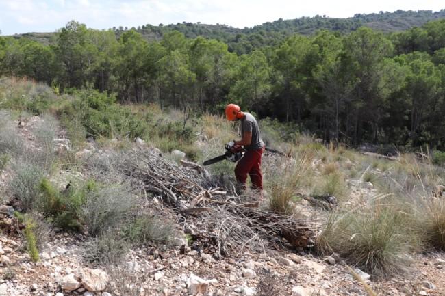 Serra Perenxisa trabajos reforestación