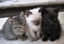 Foios acorda amb refugiocan el control de les colònies de gats