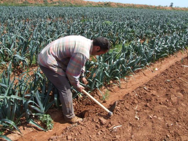 agricultor huerta Valencia