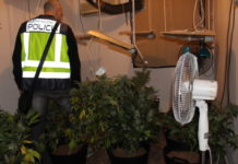 Policia nacional Torrent plantacion marihuana