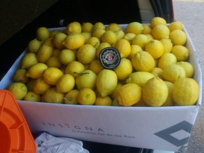 limones robados en Torrent