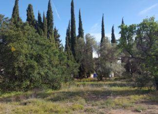 oliveras godella