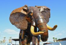 Elefante escipión - Plaza exterior BIOPARC Valencia