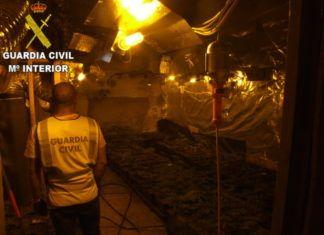 Desmantelada una organización dedicada al cultivo y tráfico de marihuana en Catarroja, Massanassa, Beniparrell y Silla