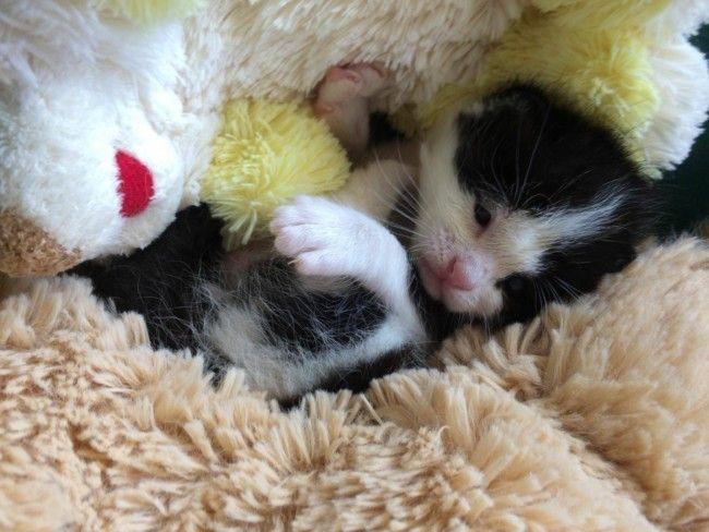 gato bebé abandonado Burjassot