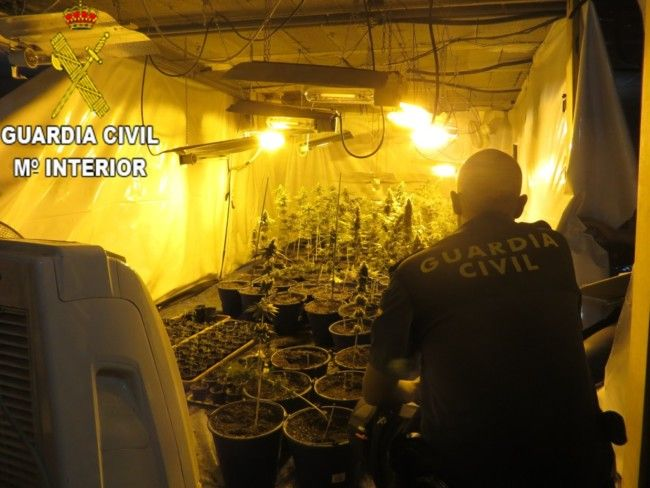 La Guardia Civil desmantela un cultivo de 95 plantas de marihuana ocultas en un chalet del término municipal de Torrent