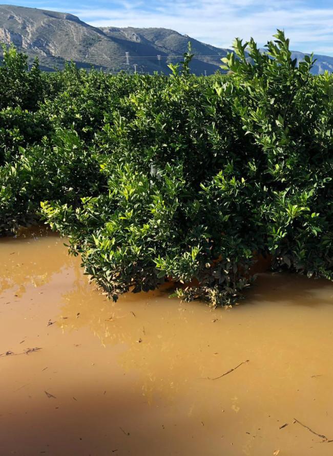 lluvia campos naranja