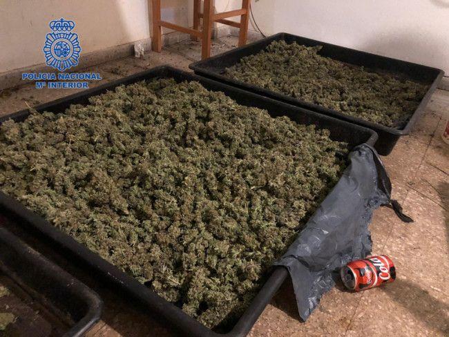 Torrent marihuana Policia Nacional