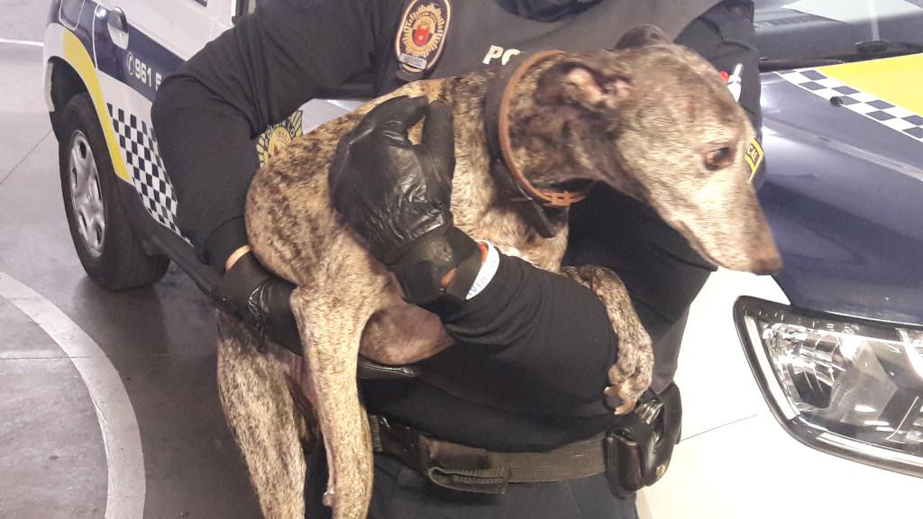 perro decomisado Policia Local Alaquàs